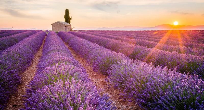 Italien Lavendel